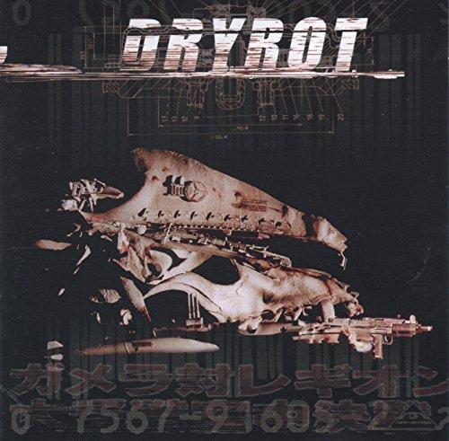 Bild 1: Dryrot, Same